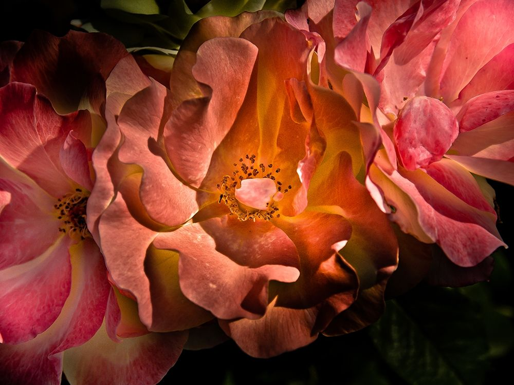konfigurieren des Kunstdrucks in Wunschgröße Backyard Flowers Coral 40 von Carson, Brian