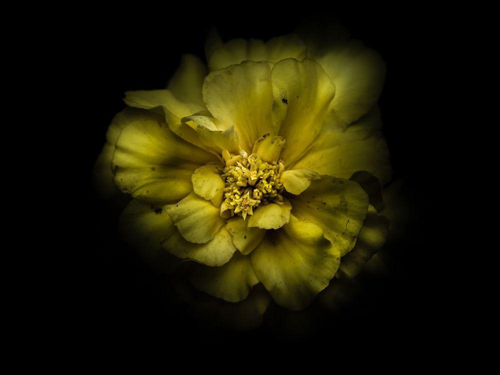konfigurieren des Kunstdrucks in Wunschgröße Backyard Flowers Yellow 41 von Carson, Brian